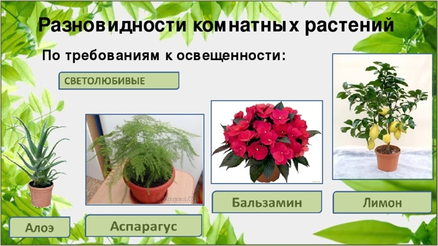 Как выбрать лампу для цветов?