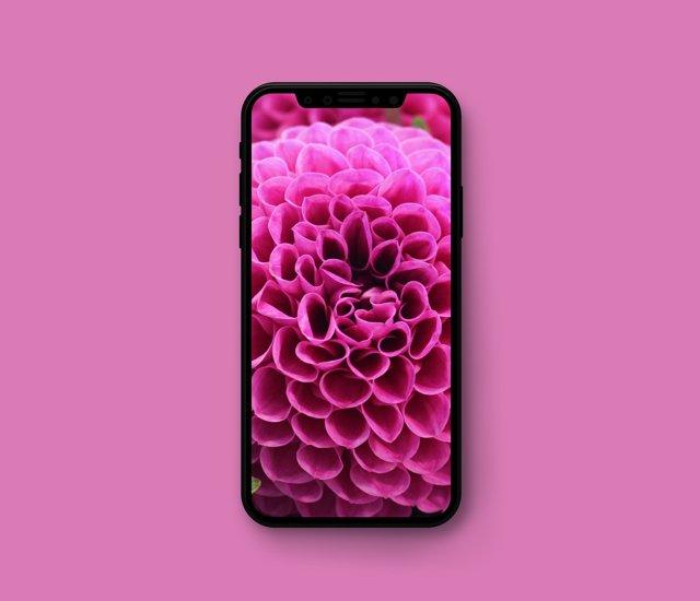 iphone 7 vs iphone 8 – что лучше? Сравнение смартфонов