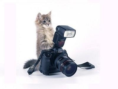Что такое iso в фотоаппарате и как его настроить?