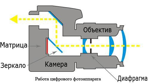 Что такое видоискатель в фотоаппарате? Оптический, электронный